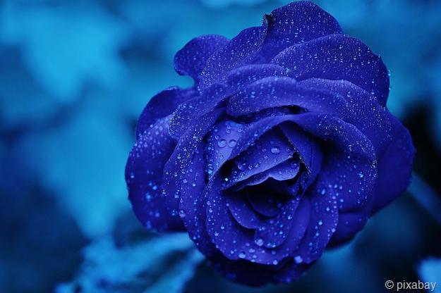 Valentinstag, der Tag der Liebe – oder?   THE INFORMATION SPACE